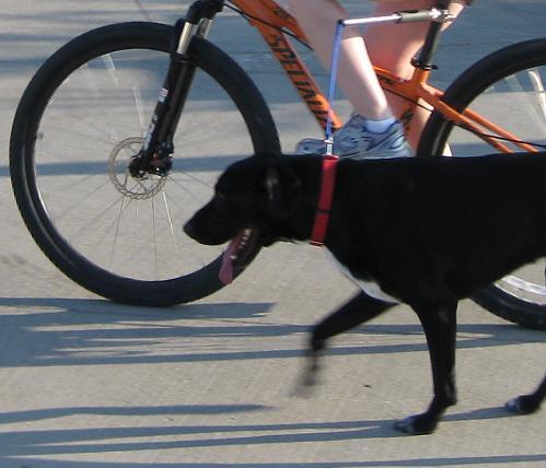 bike leash attachment