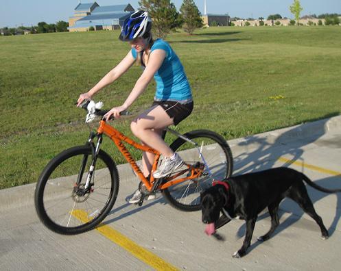 bike leash for dogs