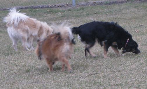 Monte, Addie and Myla