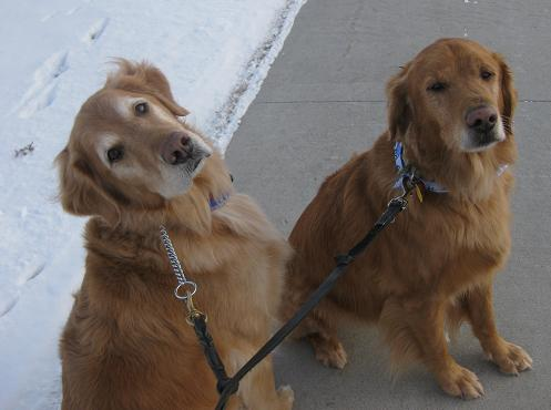 Colt and Bailey